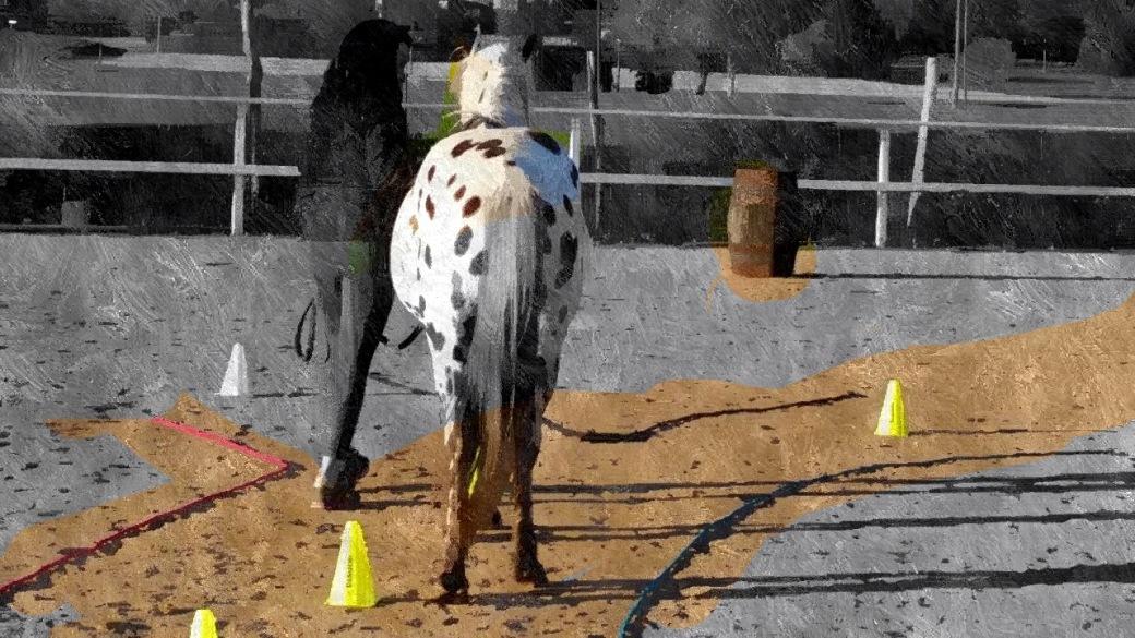 intel.ligència emocional amb cavalls Girona