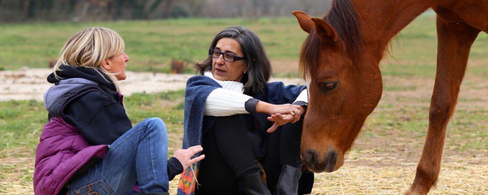 Coaching amb cavalls i Pnl Girona. Intel.ligència emocional amb cavalls Girona