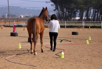 Intel·ligència emocional cavalls