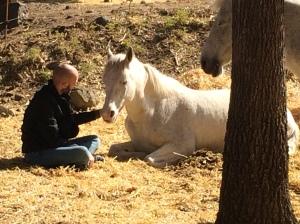 Pnl i coaching amb cavalls Girona. Intel.ligència emocional amb cavalls Girona