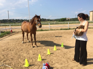 Avança Coaching PNL i Coaching cavalls Girona i Vic coaching girona i osona ntel·ligència emocional cavalls. Coaching con caballos girona i vic