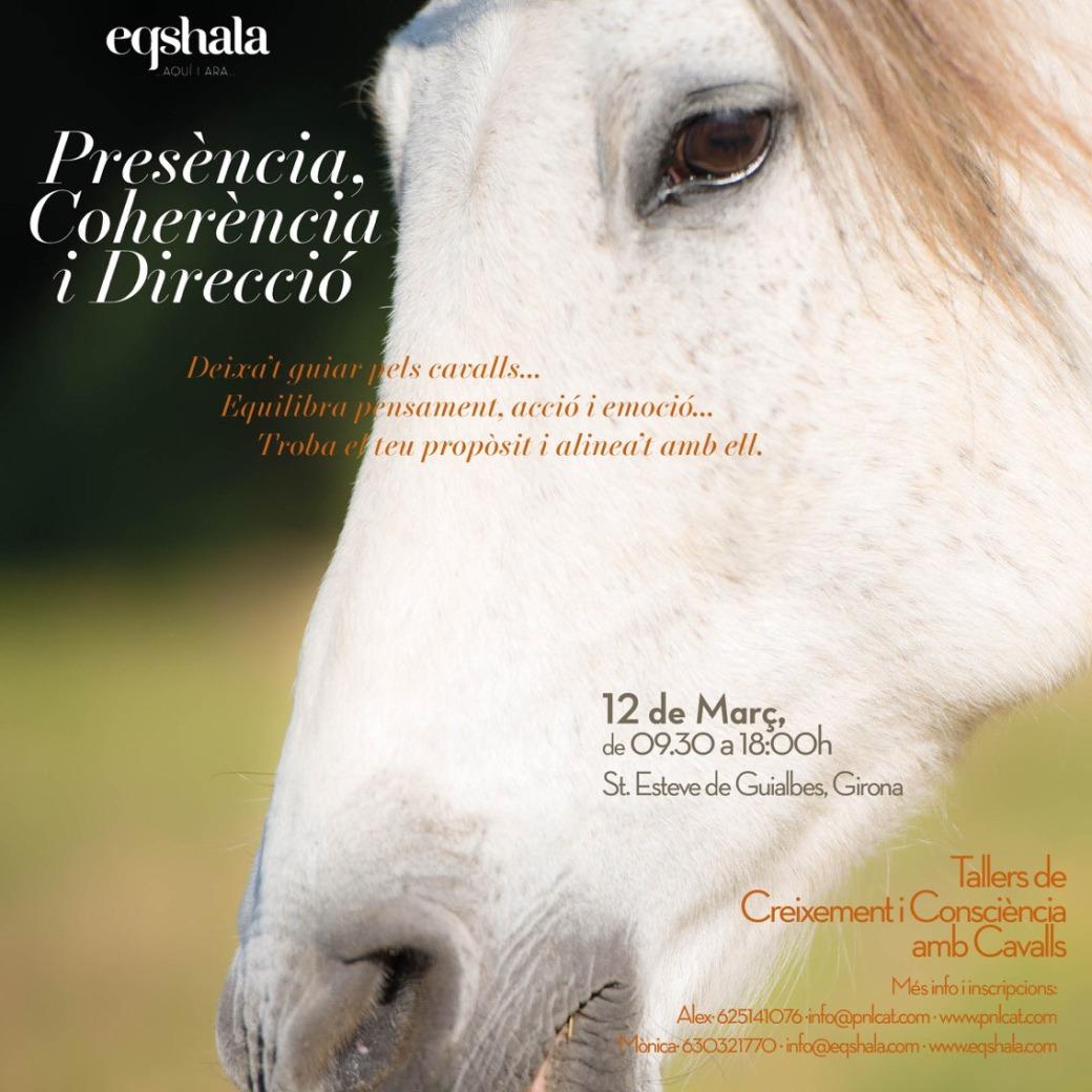coaching-cavalls
