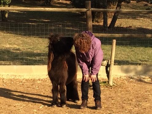 Avança Coaching PNL i Coaching cavalls Girona coaching girona
