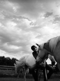coaching amb cavalls girona osona pnl